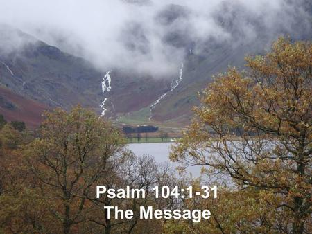 Psalm 104:1-31 The Message.