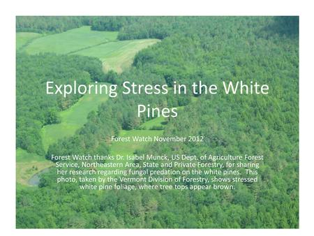 Exploring Stress in the White Pines Forest Watch November 2012 Forest Watch thanks Dr. Isabel Munck, US Dept. of Agriculture Forest Service, Northeastern.