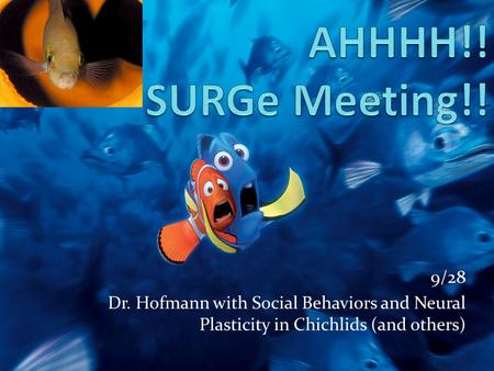 9/28 Dr. Hofmann with Social Behaviors and Neural Plasticity in Chichlids (and others)