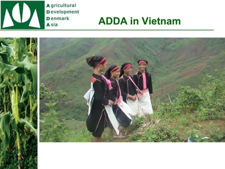 ADDA in Vietnam. ADDA Vietnam Projects The IPM Project (1998 - 2005). The Organic project (2004-2012) The Community Dev Project (2006 – 2014) The Legal.