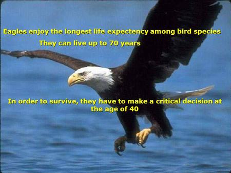 Eagles enjoy the longest life expectency among bird species Eagles enjoy the longest life expectency among bird species They can live up to 70 years In.