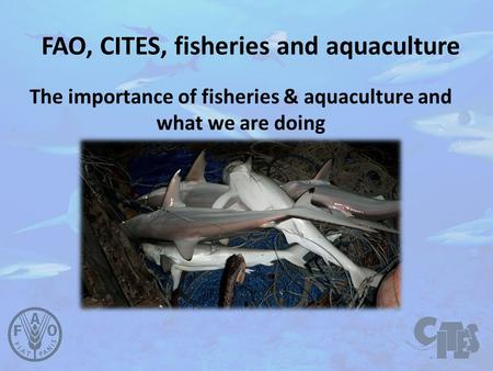 FAO, CITES, fisheries and aquaculture The importance of fisheries & aquaculture and what we are doing.