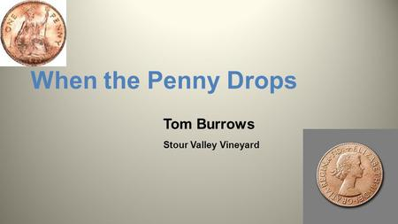 When the Penny Drops Tom Burrows Stour Valley Vineyard.