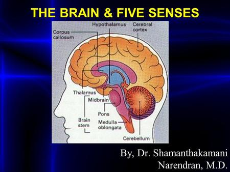 THE BRAIN & FIVE SENSES By, Dr. Shamanthakamani Narendran, M.D.