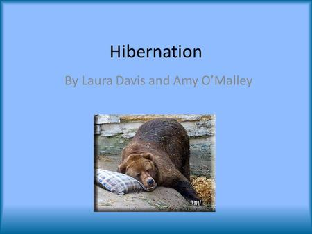 Hibernation By Laura Davis and Amy O'Malley. Preparation Late summer and fall Find location in which to safely hibernate – Areas not accessible by predators.