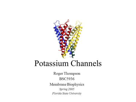 Potassium Channels Roger Thompson BSC5936 Membrane Biophysics Spring 2005 Florida State University.