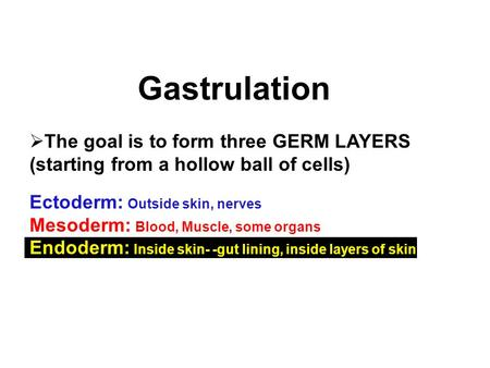 Gastrulation The goal is to form three GERM LAYERS (starting from a hollow ball of cells) Ectoderm: Outside skin, nerves Mesoderm: Blood, Muscle, some.
