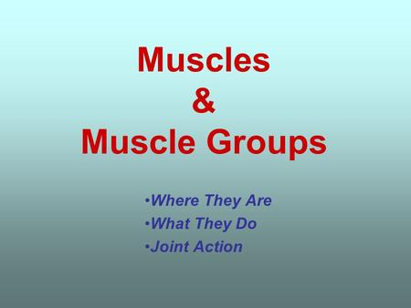 Muscles & Muscle Groups