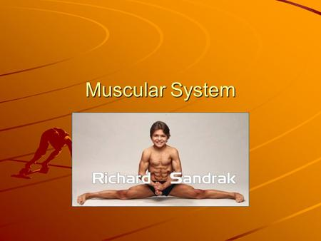 Muscular System. Functions of the Muscular System.