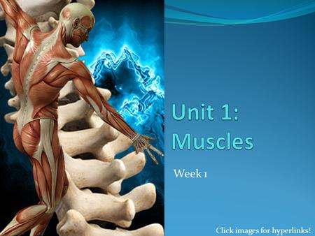 Week 1 Click images for hyperlinks!. What is a muscle? Muscles are organs made of muscular and connective tissues, which make up the Muscular System They.