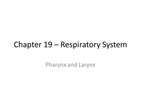 Chapter 19 – Respiratory System Pharynx and Larynx.