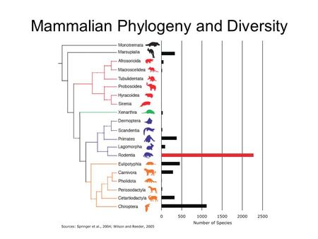 Mammalian Phylogeny and Diversity. Rodentia Sub-orders (Mammal Species of the World, 3rd ed., 2005) Sub-orderMasseteric conditionMandibular condition.