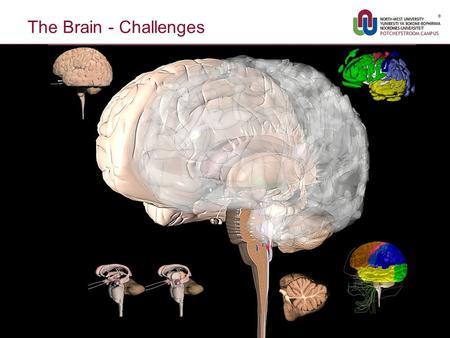 The Brain - Challenges 1. Relationship Dynamics/Kinetics - Challenges 2.