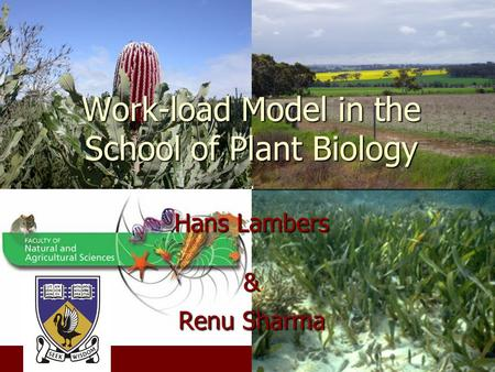 Work-load Model in the School of Plant Biology Hans Lambers & Renu Sharma.
