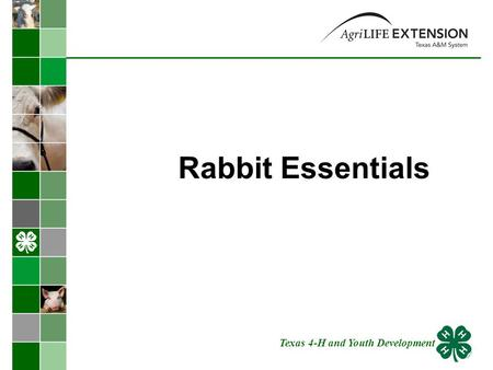 Rabbit Essentials Texas 4-H and Youth Development.