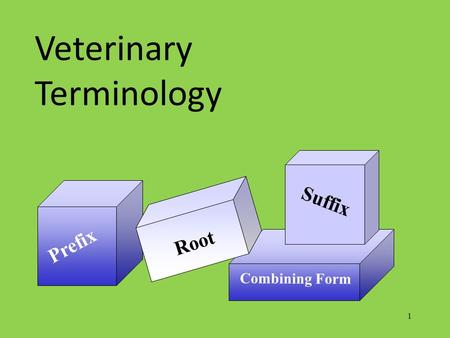 1 Prefix Combining Form Root Suffix Veterinary Terminology.