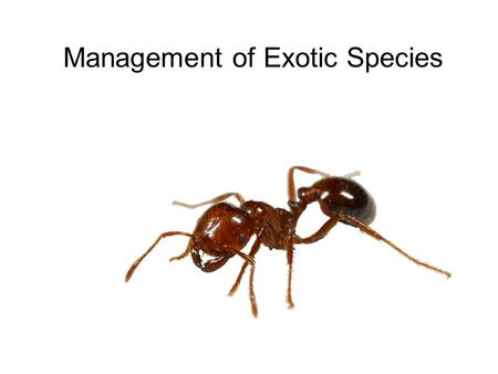 Management of Exotic Species. Sometimes, the introduction of a species to a new area has proven to be very beneficial. Often, however, these introduced.