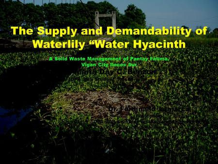 "The Supply and Demandability of Waterlily ""Water Hyacinth"