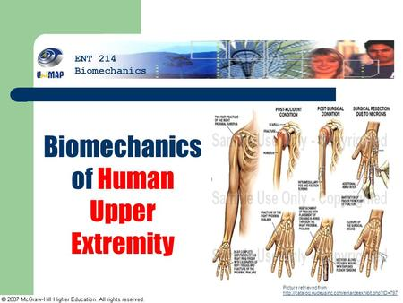 Biomechanics of Human Upper Extremity Picture retrieved from