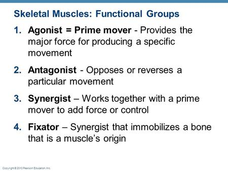 Copyright © 2010 Pearson Education, Inc. Skeletal Muscles: Functional Groups 1.Agonist = Prime mover - Provides the major force for producing a specific.