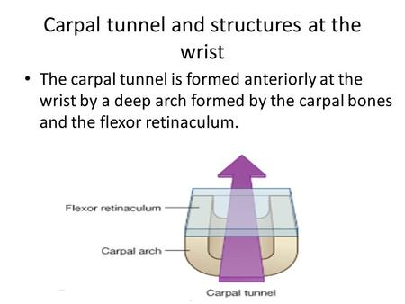 The carpal tunnel is formed anteriorly at the wrist by a deep arch formed by the carpal bones and the flexor retinaculum. Carpal tunnel and structures.