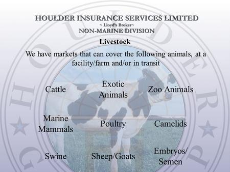 Livestock We have markets that can cover the following animals, at a facility/farm and/or in transit Embryos/ Semen Sheep/GoatsSwine CamelidsPoultry Marine.
