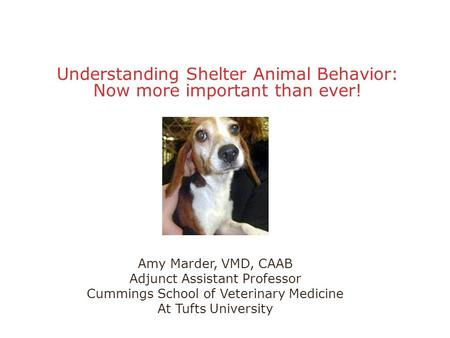 Understanding Shelter Animal Behavior: Now more important than ever! Amy Marder, VMD, CAAB Adjunct Assistant Professor Cummings School of Veterinary Medicine.