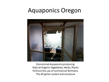 Aquaponics Oregon Economical Aquaponics producing Natural Organic Vegetables, Herbs, Plants Without the use of commercial fertilizers. The 40 gallon system.