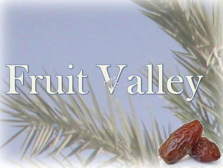 Fruit Valley is a family owned company since 1980. We specialize in growing Medjhoul Dates. The Medjhoul Dates are grown along the Biblical Jordan River.