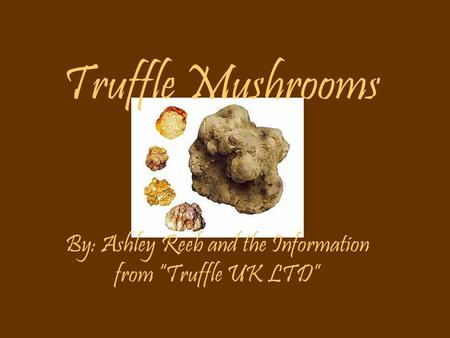 "Truffle Mushrooms By: Ashley Reeb and the Information from ""Truffle UK LTD"""