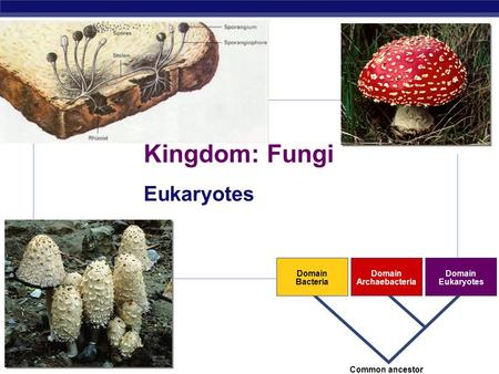 ap bio fungi Quizzes online exam advanced placement ap biology ap bio outline quiz ch 31 ap bio outline quiz ch 31 10 questions | by rnreda | last updated: dec 26, 2012 ch 31 fungi outline quiz or create online exam reveal answers: during the quiz (practice mode.