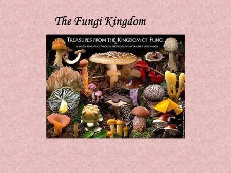 The Fungi Kingdom Mycology -the study of fungi fungi - singular fungus - plural 1) fungi are eukaryotic they have a nuclei & mitochondria 2) they are.