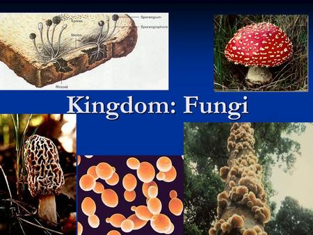 Kingdom: Fungi Five kingdom system of classifying living things showing that both fungi and animals may have evolved from a common ancestor.