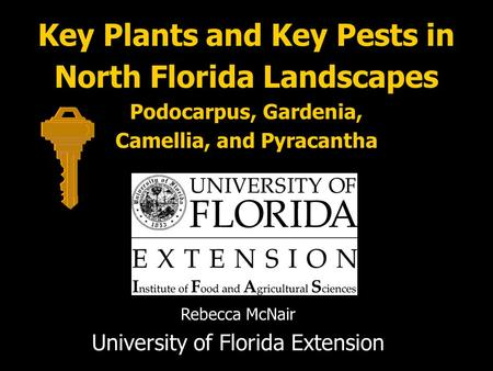 Key Plants and Key Pests in North Florida Landscapes Podocarpus, Gardenia, Camellia, and Pyracantha Rebecca McNair University of Florida Extension.