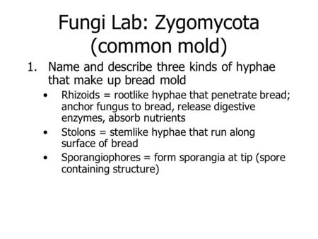 Fungi Lab: Zygomycota (common mold) 1.Name and describe three kinds of hyphae that make up bread mold Rhizoids = rootlike hyphae that penetrate bread;