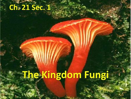 Ch. 21 Sec. 1 The Kingdom Fungi.