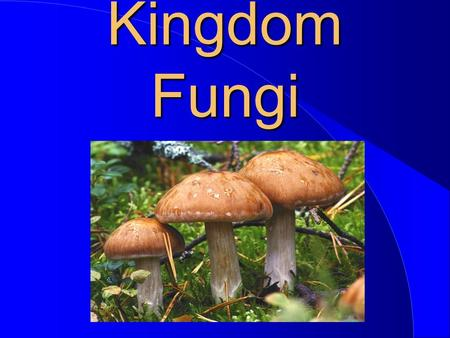 Kingdom Fungi. Fungi In The Scheme Of Life Plantae Fungi Monera Animalia........................ Protista.