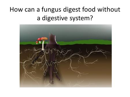 How can a fungus digest food without a digestive system?