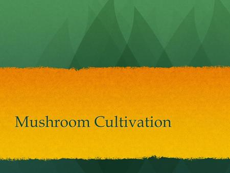 Mushroom Cultivation. Mushrooms in History Mushrooms have been used by humans for thousands of years for a variety of purposes: Mushrooms have been used.