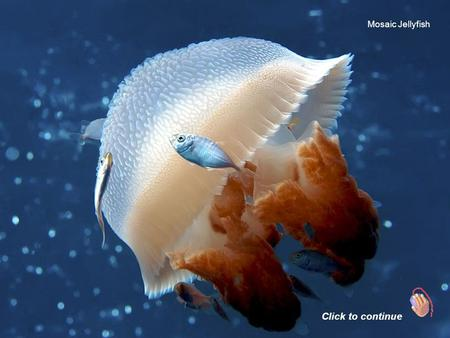 Mosaic Jellyfish Click to continue Octopus Frogfish.