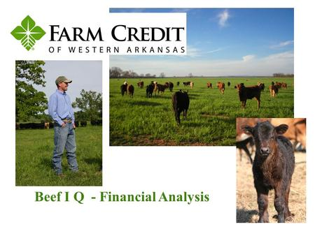 Beef I Q - Financial Analysis. The primary emphasis of financial analysis is to properly assess business risk in the lending decision. Financial analysis.