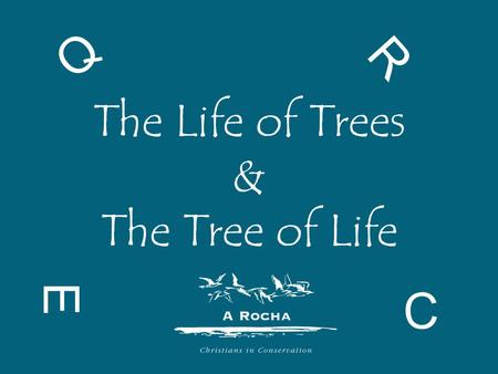 The Life of Trees & The Tree of Life E R C Q. What does life depend on?
