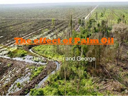 The effect of Palm Oil Jake, Calum and George. Why is palm oil a problem? The global palm oil industry is expanding rapidly: it's used in an increasing.
