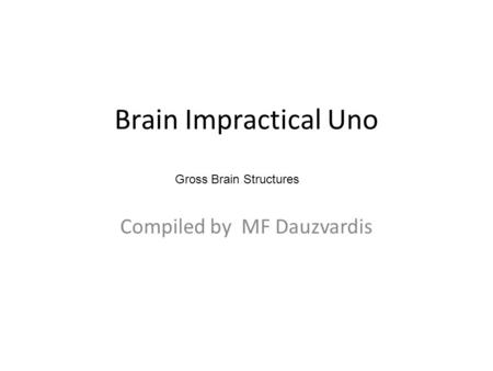 Brain Impractical Uno Compiled by MF Dauzvardis Gross Brain Structures.