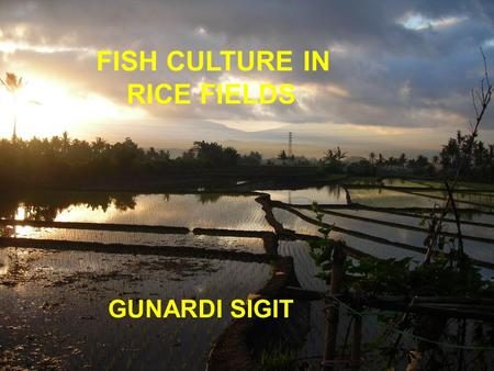 FISH CULTURE IN RICE FIELDS GUNARDI SIGIT. Introduction Cultivating rice and fish together has been centuries old tradition in some parts of southeast.