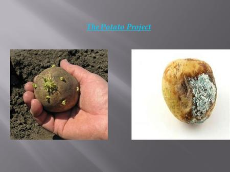 The Potato Project. To observe and determine the growth of mold on potatoes when adding different variables [ dog saliva, cut into four, dishwasher, ipad,