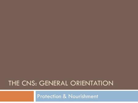 THE CNS: GENERAL ORIENTATION Protection & Nourishment.