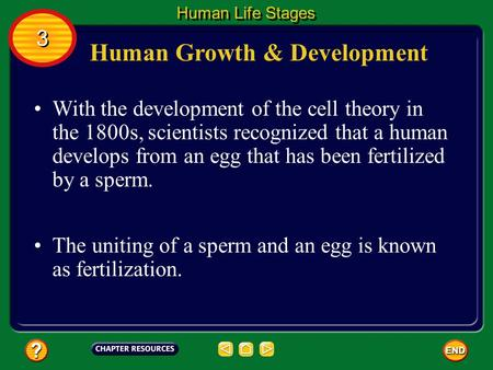 Human Growth & Development With the development of the cell theory in the 1800s, scientists recognized that a human develops from an egg that has been.