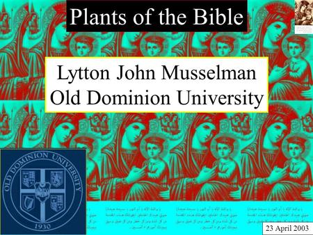 Plants of the Bible Lytton John Musselman Old Dominion University 23 April 2003.