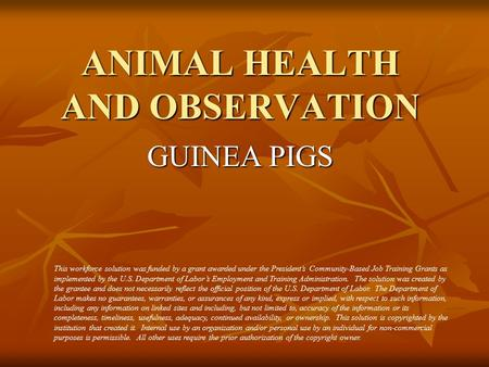 ANIMAL HEALTH AND OBSERVATION GUINEA PIGS This workforce solution was funded by a grant awarded under the President's Community-Based Job Training Grants.